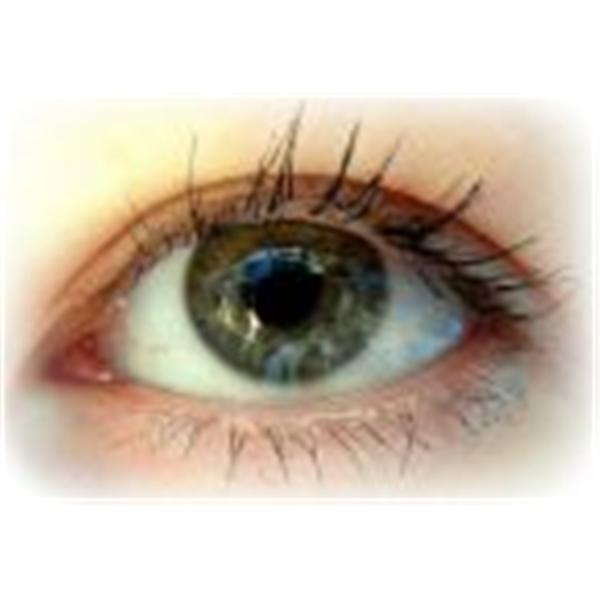 Other Peoples Eyes