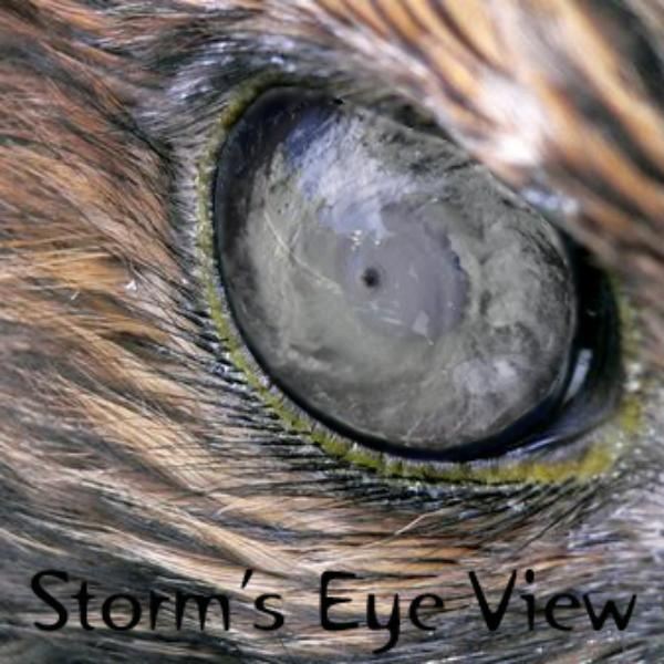 Storm's Eye View