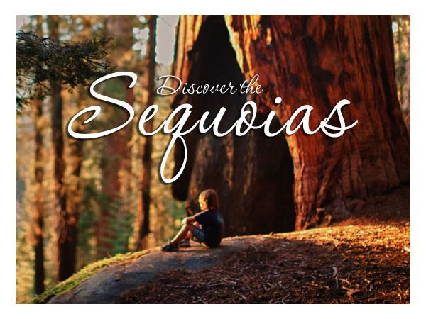 Big Blend Radio: Summer in California's Sequoia Country